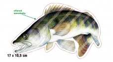 Rybárska samolepka ZUBÁČ L