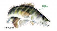Rybárska samolepka ZUBÁČ P