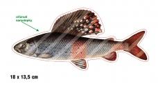 Rybárska samolepka LIPEŇ L