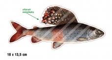 Rybárska samolepka LIPEŇ P