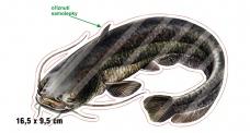 Rybárska samolepka SUMEC P